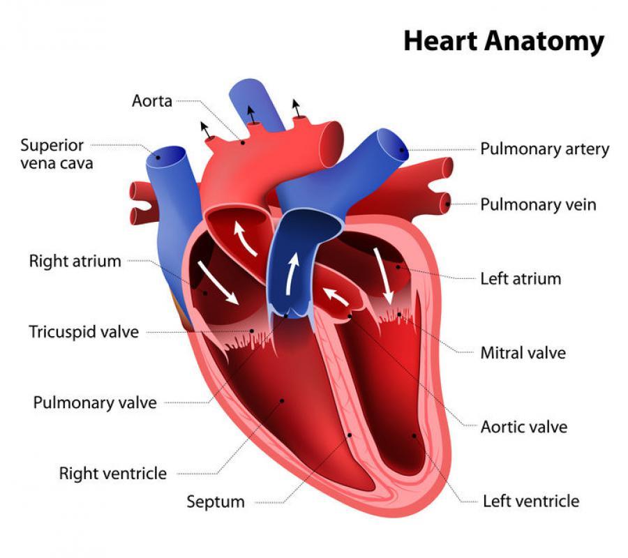 โรคลิ้นหัวใจรั่ว